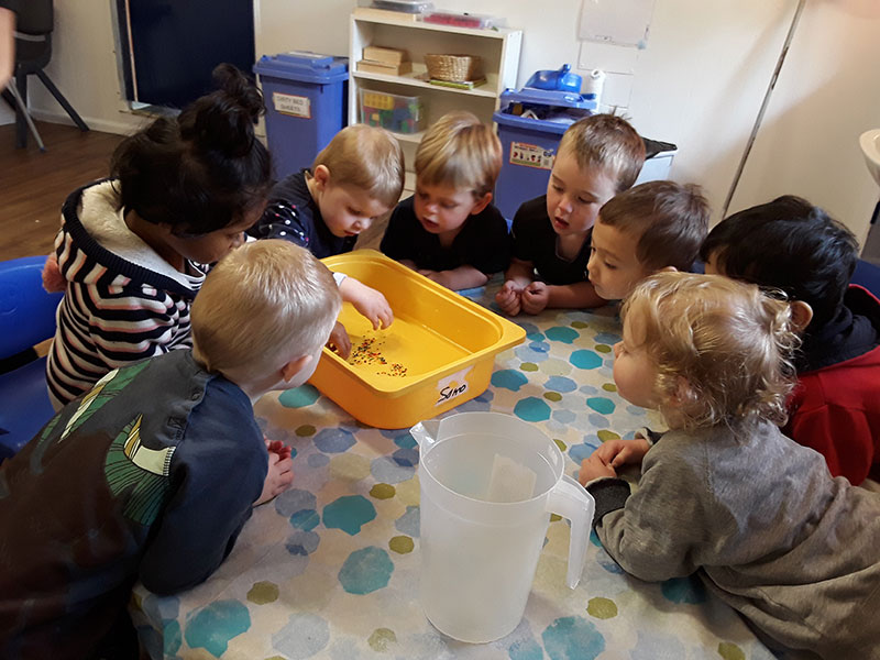 Wallabies Early Learning Program